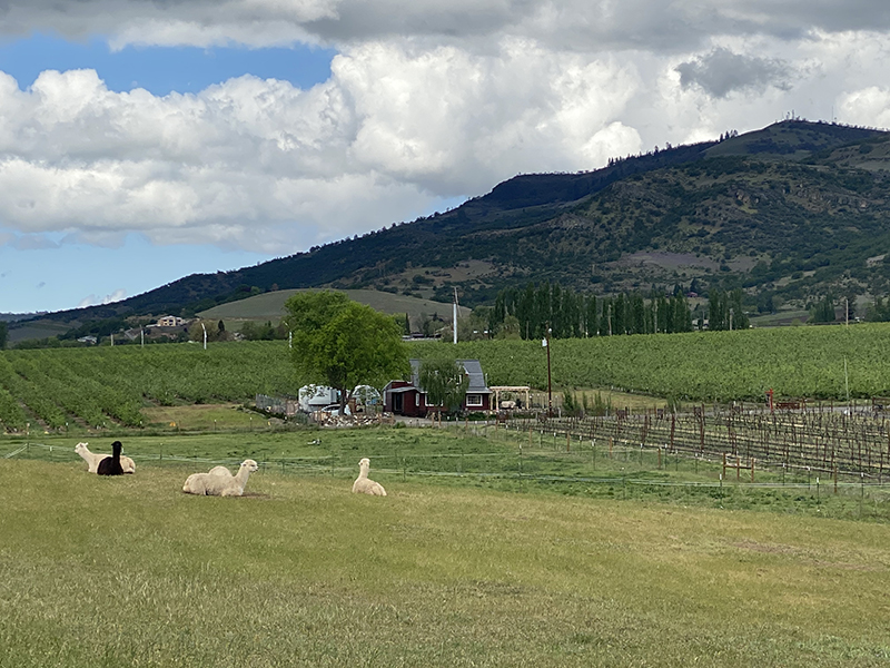 Scenic countryside view of green hill and farm animals